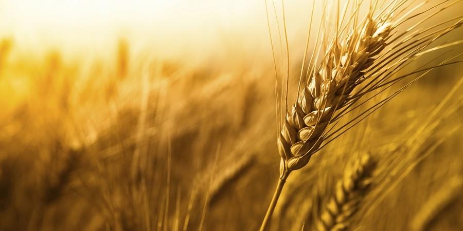 کشاورزی ایران