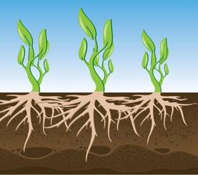 توزیع عمده اسید هیومیک پودری