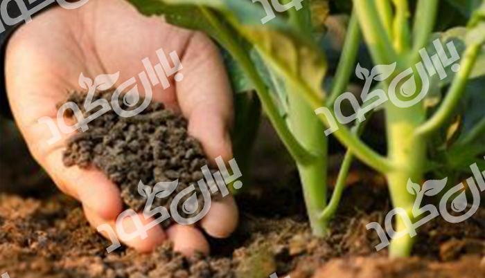 تولید کود ارگانیک